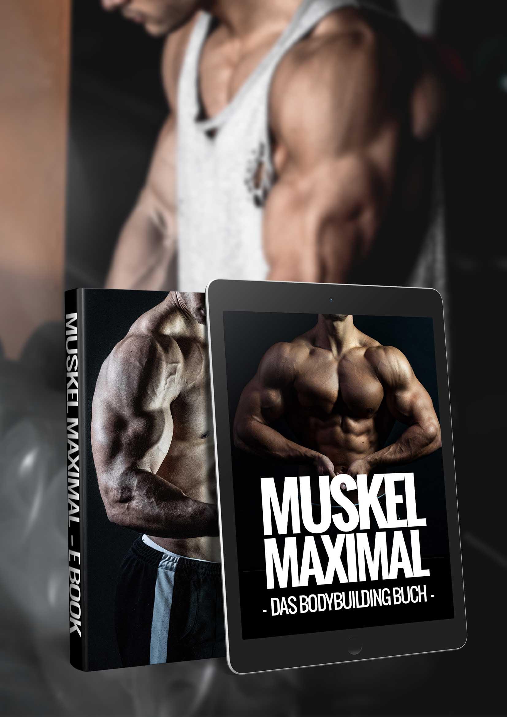 Muskel Maximal Maximaler Muskelaufbau Trainingspläne
